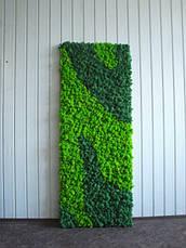 Панелі зі стабілізованим мохом