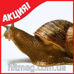 SnailMe - улиточный эликсир из Тайланда (Оригинал), фото 4