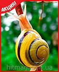 SnailMe - улиточный эликсир из Тайланда (Оригинал), фото 10