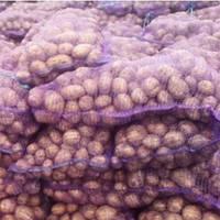 Картопля сіменна