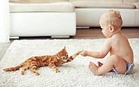 Дитина і тварини в квартирі, будинку.
