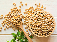 СОЯ Микрозелень, бобы органической сои для проращивания 200 грамм, фото 1