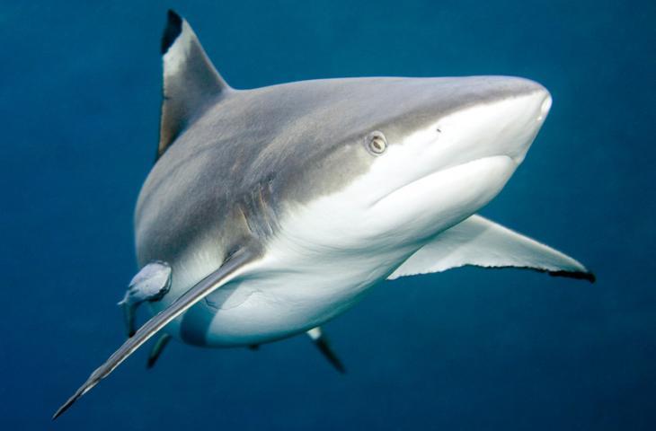Акулий хрящ в капсулах для суставов. Днепр.