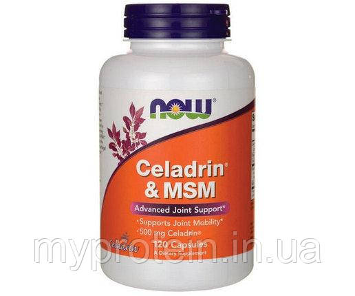 NOWЦеладрин метилсульфонилметанCeladrin & MSM120 caps