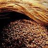 Ржаной солод Беларусь 0,5 кг