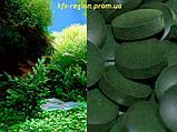 Каша «Самарский здоровяк» №32 Пшеничная со спирулиной и ламинарией, фото 2