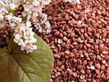 Каша «Самарский здоровяк» №36 Пшенично-гречневая с расторопшей и топинамбуром, фото 2