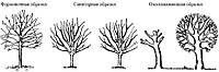 Обрезка плодовых деревьев осенью.