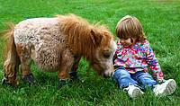 Пони обычный и миниатюрный пони Фалабелла