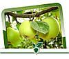Защита яблони от вредителей растений.