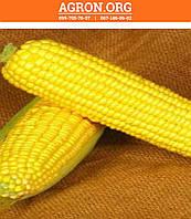 Світ Вондер F1 семена кукурудзи солодкої Agri Saaten 1 000 семян