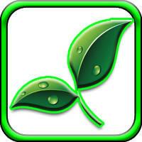 Озеленение помещений и летних террас
