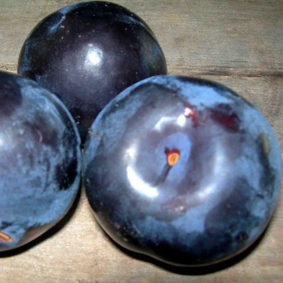 Саженцы Сливы Блек Амбер (Black Amber) - позднего срока, очень крупная, морозостойкая