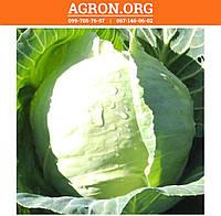 Радан F1 семена капусти белокочанной ранньої Enza Zaden 2 500 семян, фото 1