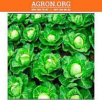 Свірель F1 семена капусти белокочанной ранньої Nunhems 2 500 семян, фото 1