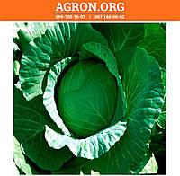 Лаура F1 семена капусти белокочанной ранньої Agri Saaten 1 000 семян, фото 1
