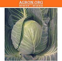 Кастелло F1 семена капусти белокочанной ранньої Hazera 1 000 семян, фото 1
