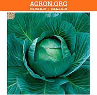 Вестрі F1 семена капусти белокочанной середньої Seminis 500 семян, фото 1