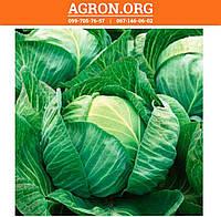 Джинтама F1 семена капусти белокочанной середньої калібр Rijk Zwaan2 500 семян, фото 1