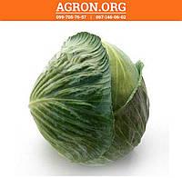 Лагрима F1 (Lagrima F1) семена капусты белокачанной поздней Rijk Zwaan  2 500 семян, фото 1