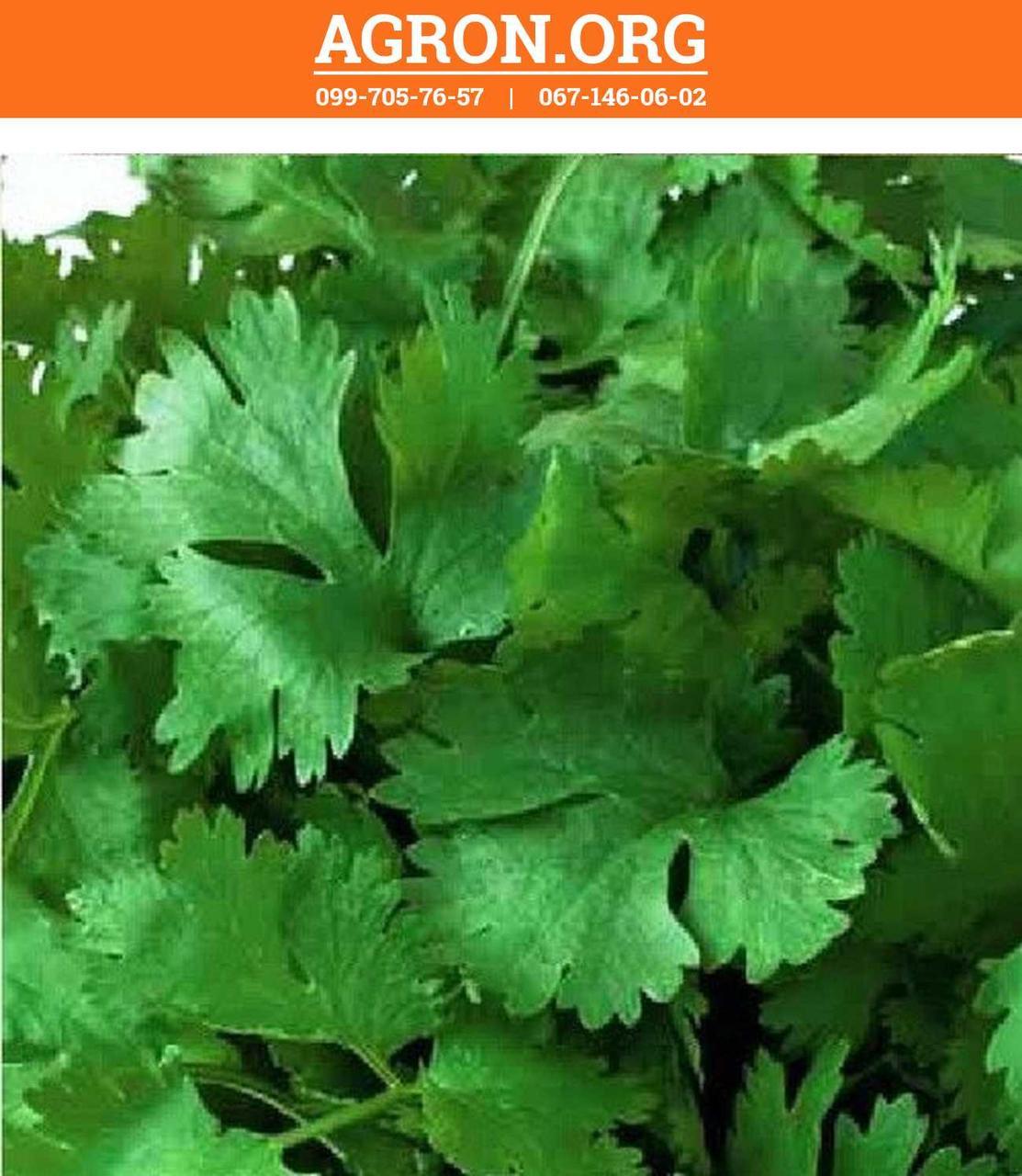 Слоуболт семена кориандра/кинзы салатного Hem Zaden 1 000 г