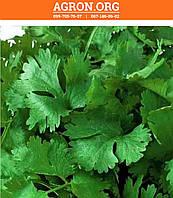 Слоуболт семена кориандра/кинзы салатного Hem Zaden 1 000 г, фото 1