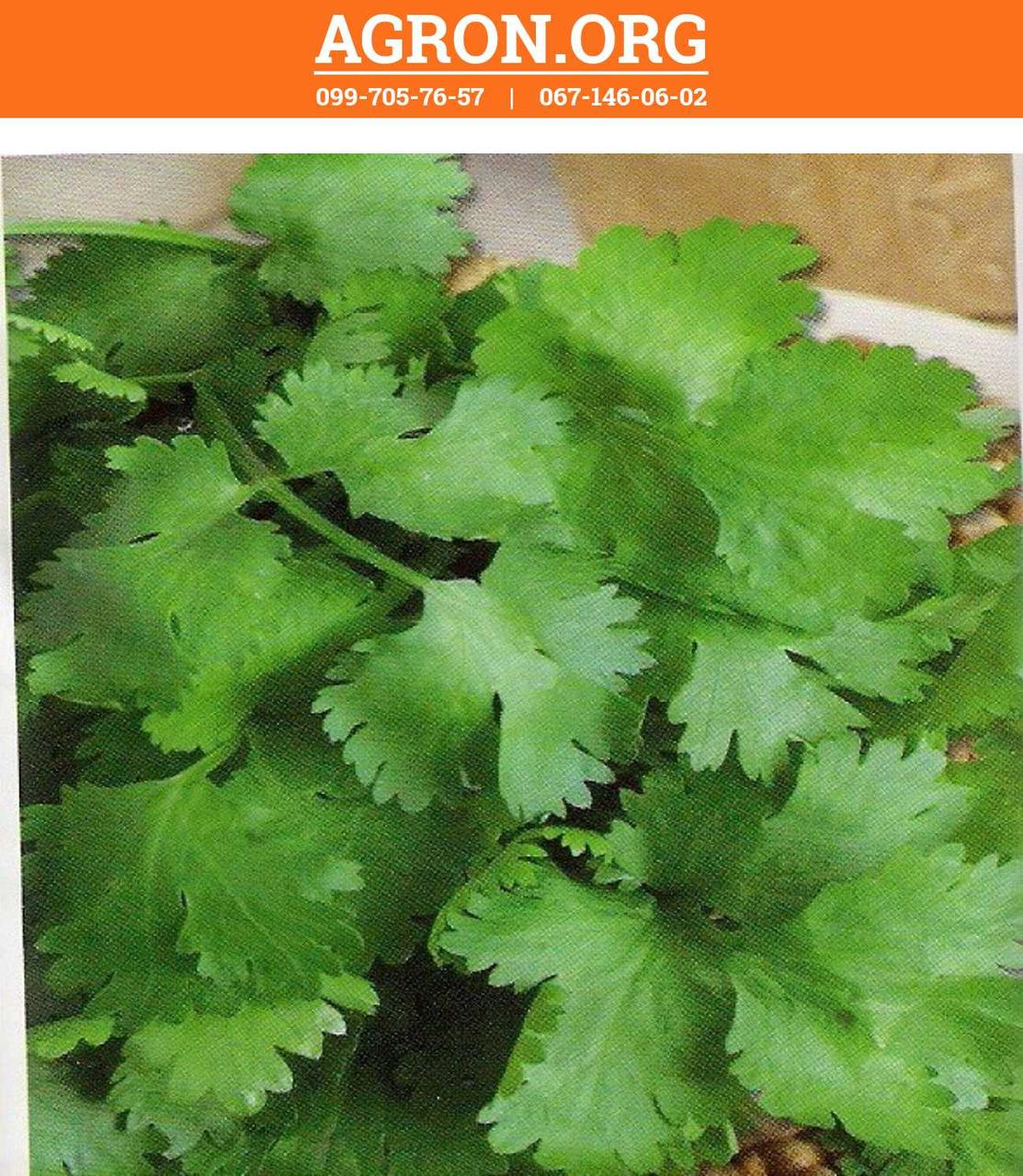 Американо семена кориандра/кинзы Euroseed 500 г