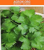 Американо семена кориандра/кинзы Euroseed 5 г, фото 1