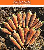 ЛС-2513 F1 (LS-2513 F1) семена моркови Берликум lucky Seed 25 г, фото 1