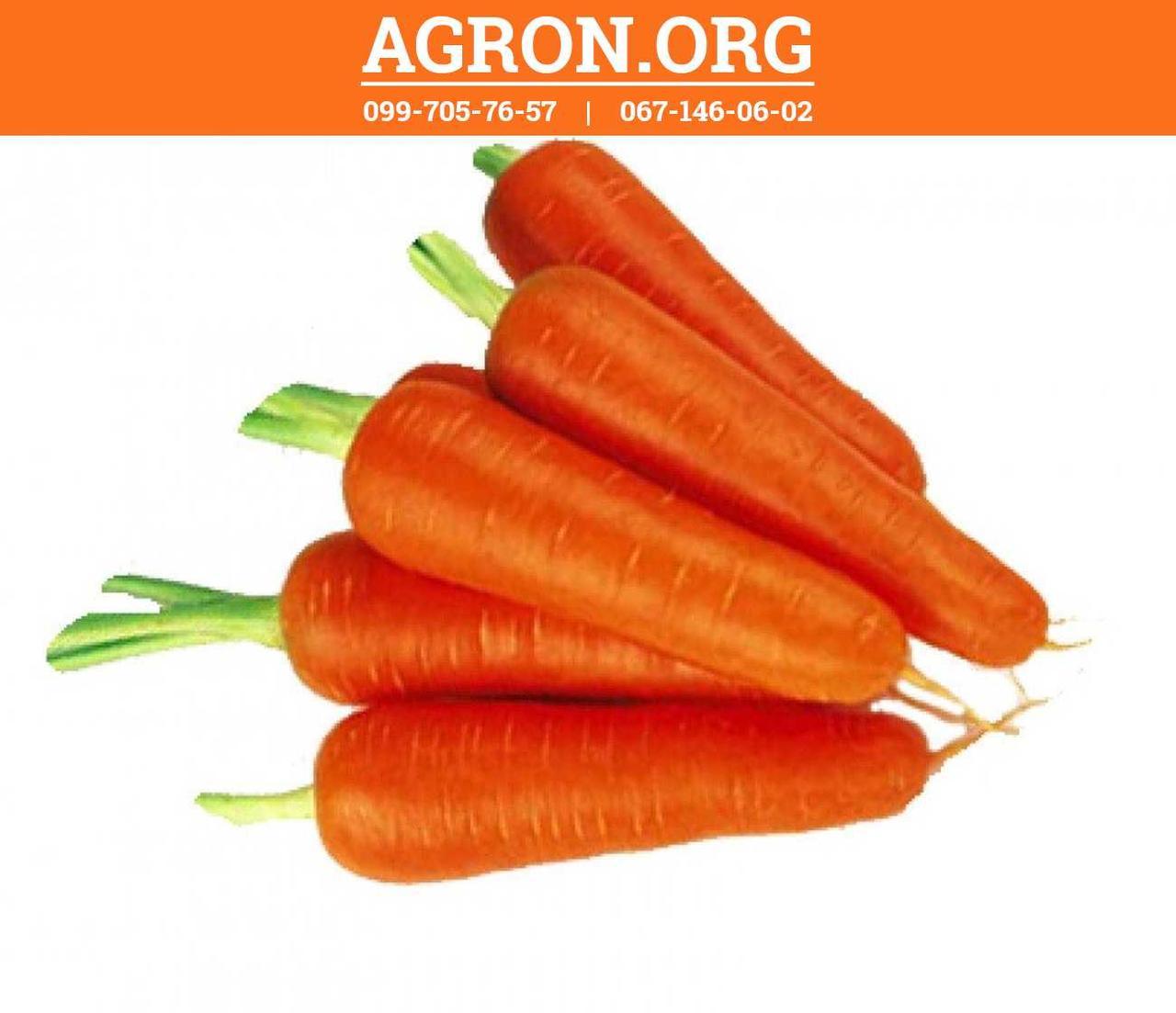 Абако F1 (Abaco F1) семена моркви Seminis 400 семян