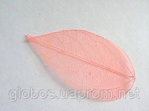 Листья высушенные  для дизайна ногтей RENEE IF03-03, фото 2