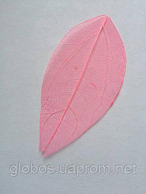 Листья высушенные  для дизайна ногтей RENEE IF03-04, фото 2