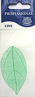 Листья высушенные  для дизайна ногтей RENEE IF03-09