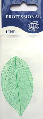 Листья высушенные  для дизайна ногтей RENEE IF03-09, фото 2