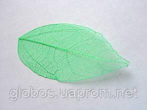 Листья высушенные  для дизайна ногтей RENEE IF03-09, фото 3