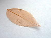 Листья высушенные  для дизайна ногтей RENEE IF03-07
