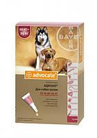 Капли Bayer Advocat  (капли от блох, клещей и глистов) для собак 10-25кг