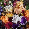 Сад цветов Частная коллекция Надежды Бортник
