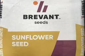 Купить Семена подсолнечника ДСХ403