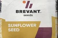 Семена подсолнечника П64ГГ132