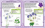 Дикі квіти. Міні-енциклопедія., фото 4