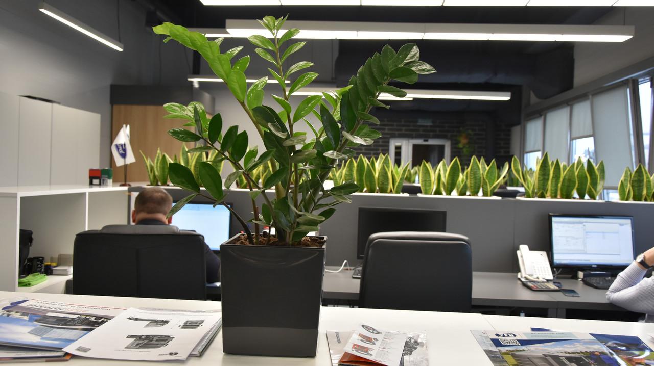 Озеленение офиса под ключ. ФитоРум.