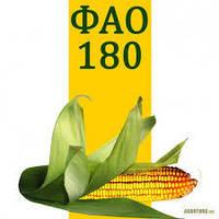 Кукуруза Вита (ФАО 270)