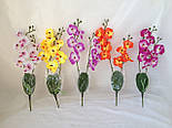 Орхидея  фаленопсис двойная средняя с латексным листьями и корнем 40 см, фото 2