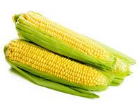 Десикация кукурузы