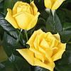 Роза штамбовая Ландора