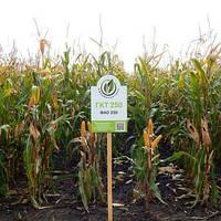 Семена кукурузы ГКТ 250