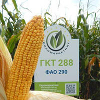 Семена кукурузы ГКТ 288