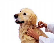 Вакцины,сыворотки для собак