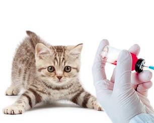 Вакцини,сироватки для котів